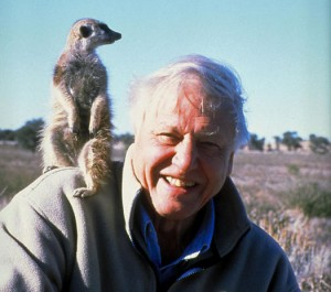 "David Attenborough in ""The Life of Mammals"""