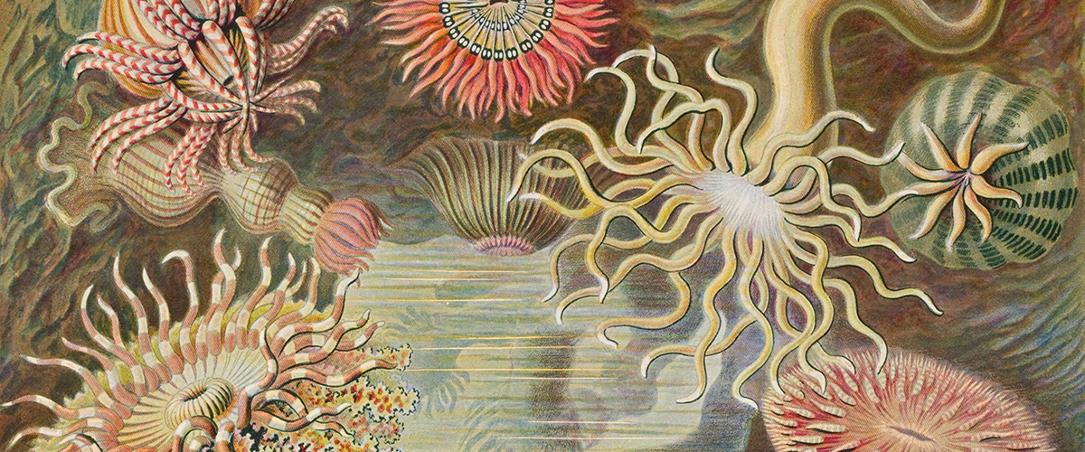 Haeckel_cropped